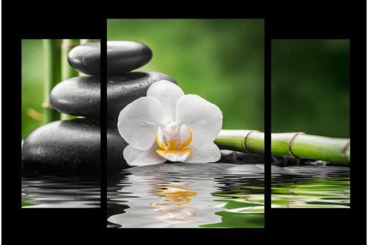 Модульная картина Белая орхидея на воде